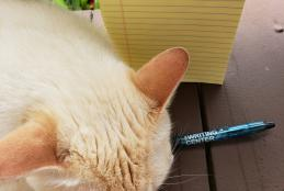 Photograph of sleeping cat with notebook and Writing Center pen
